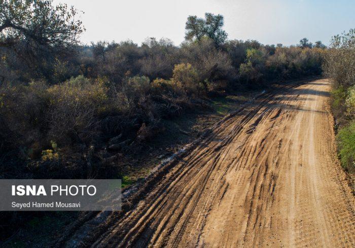 """با عواقب خسارتبار جادهسازی در جنگلهای انبوه """"رپی"""" چه باید کرد؟"""