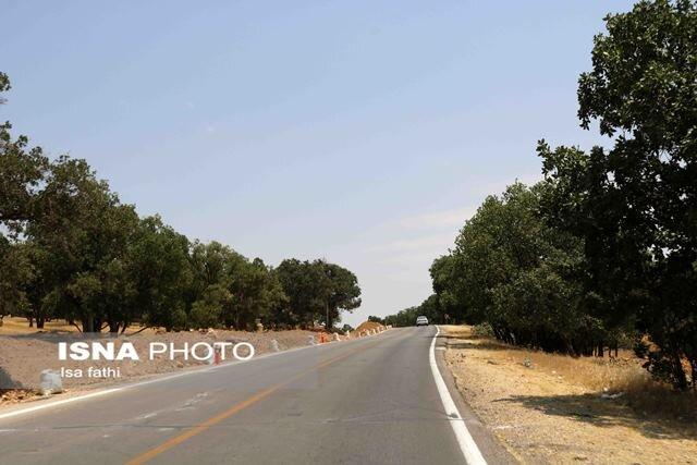 برای ساخت راه این روستا، ۱۰۰۰ درخت باید قطع شود