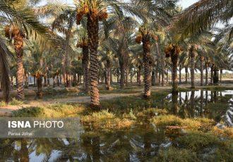 دستگیری سارق باغات کشاورزی در دشتستان