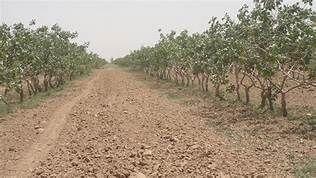 اهالی موسویه هزینه اراضی مازاد را قسطی پرداخت کنند