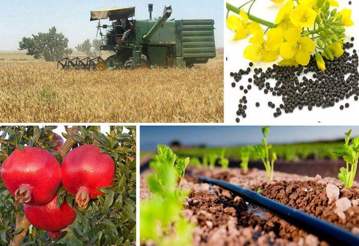 تشکل های کشاورزی برای تامین نهاده های تولید اعلام آمادگی کردند