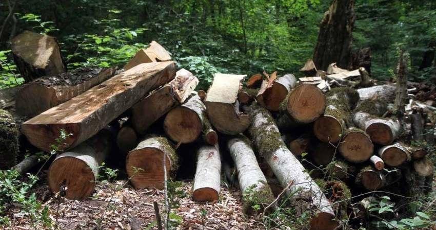 کشف و ضبط ۳۹ اصله چوب در روستای فخرآباد شهرستان رشت
