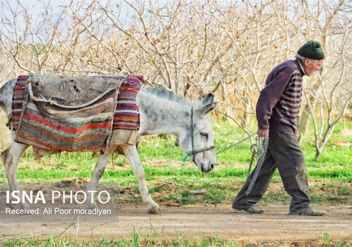 ایران زیباست؛ روستای اسفندآباد ابرکوه و سادگی مردمانش