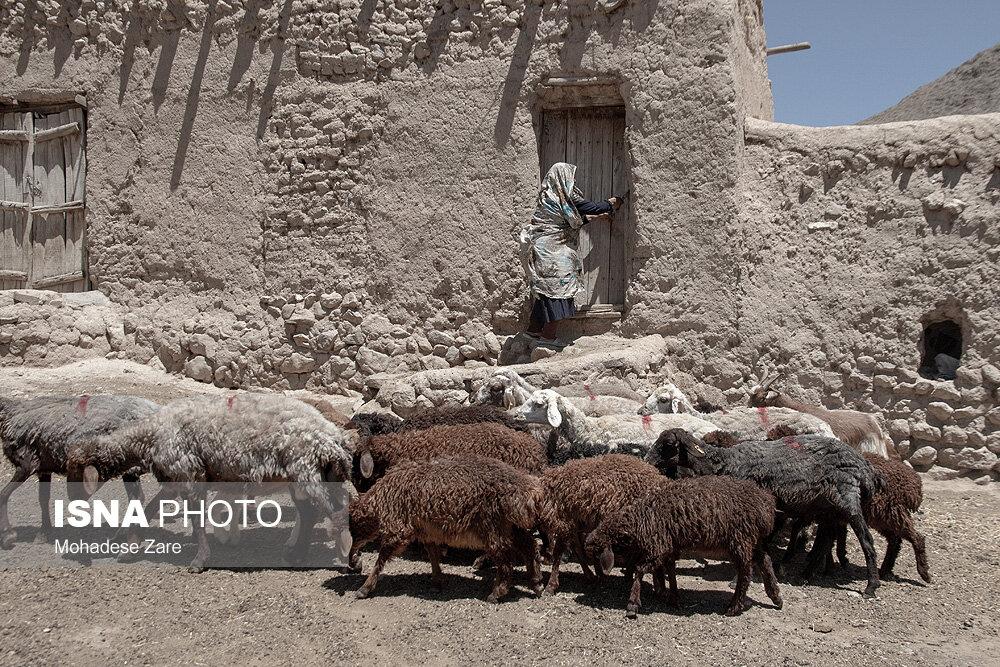 زخمِ کاری خشکسالی بر جان کلاته عربها