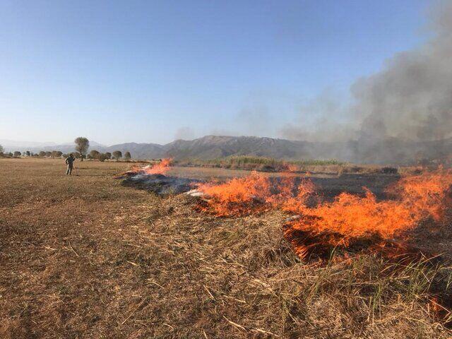 آتش به جان ۱۰ هکتار منابع طبیعی و ۶۰ نخل عنبرآباد افتاد