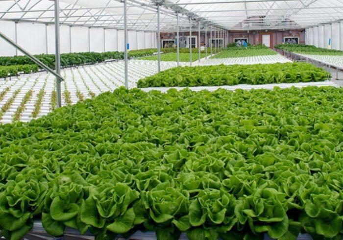 بهره برداری از ۸ واحد گلخانه ای در بوچیر پارسیان