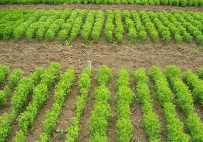 فراهم شدن بذر کشت پاییزه برای کشاورزان کرمانی