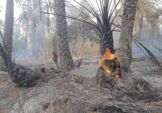 نخلستانهای روستای شیبان در آتش سوخت
